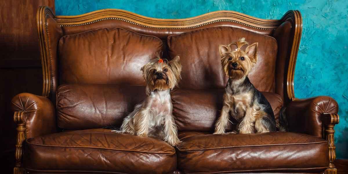 ספה מעור נקיה עם כלבים