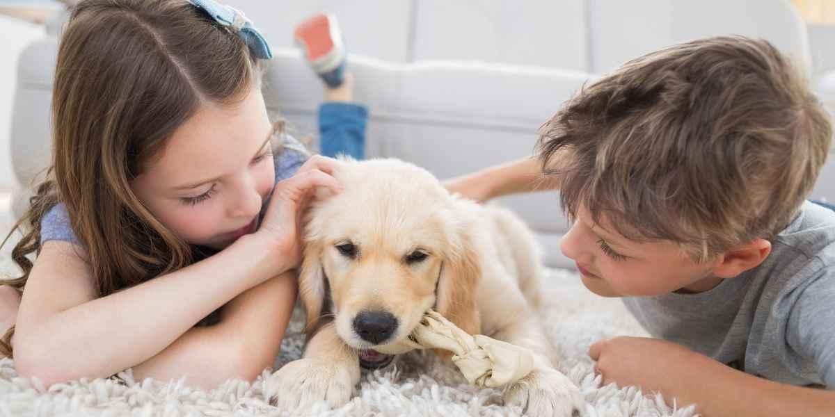 שטיח עם ילדים וכלב